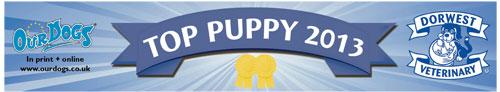 Top Puppy 2013