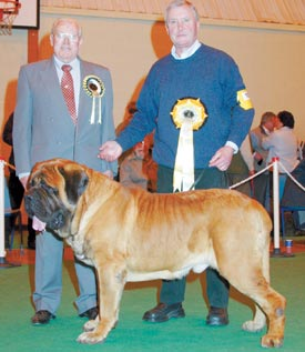 U.k The Mastiff Association 11th Mastiff Association