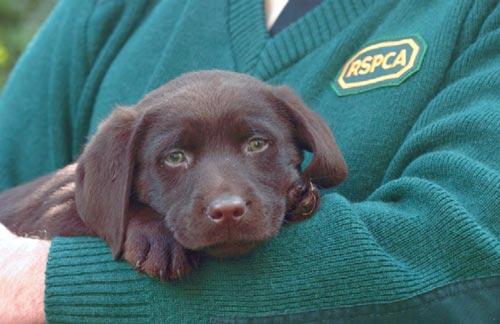 Rspca Dog Breeds