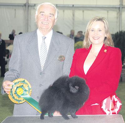 Pomeranian+dog+show