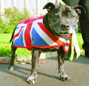 Our Dogs Newspaper News Breeders Showdogs Dog Breeds Pedigree